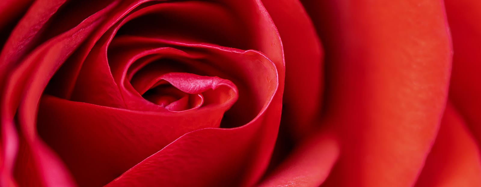 Essential oils for romance - Red rose